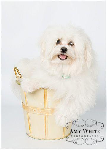 Cute Dog A Healthy Dog Is A Happy Dog Www Petwellbeing Org