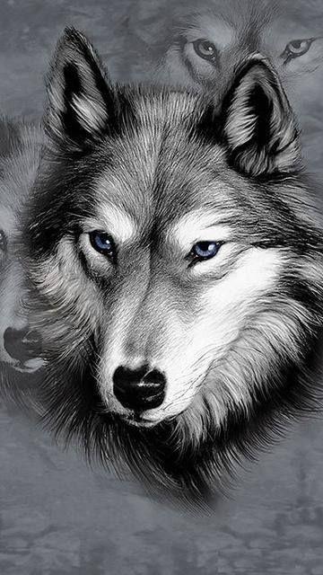Grises Que Lindo Lobos Sería Bueno Dibujar En Lapiz Lobos