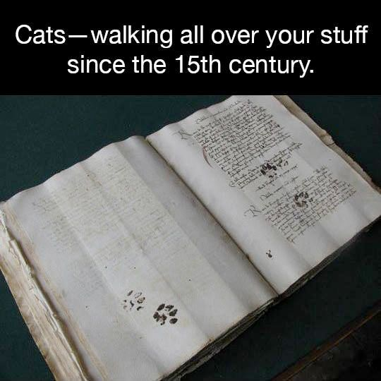 Cats—walking all over your stuff since the 15th Century (and then some)