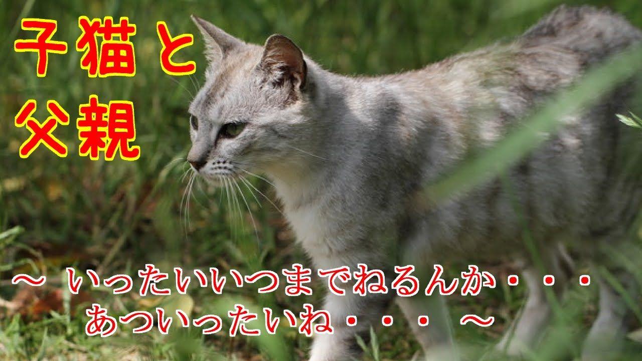 Https Www Youtube Com Watch V X2aj5zlsjw8 Feature Share 子猫 猫 泣ける