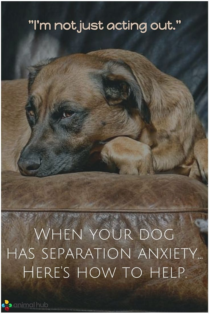 When Your Dog Has Separation Anxiety Heres How To Help Puppies