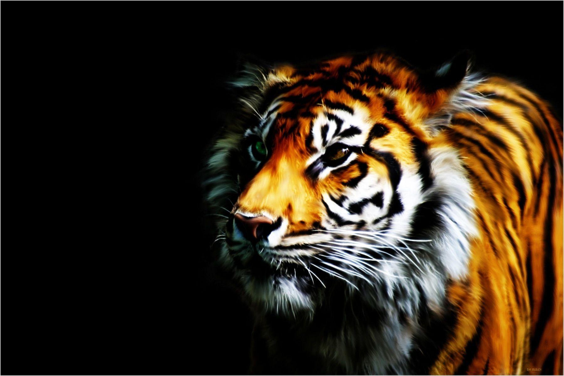 Cool Tiger HD Wallpaper
