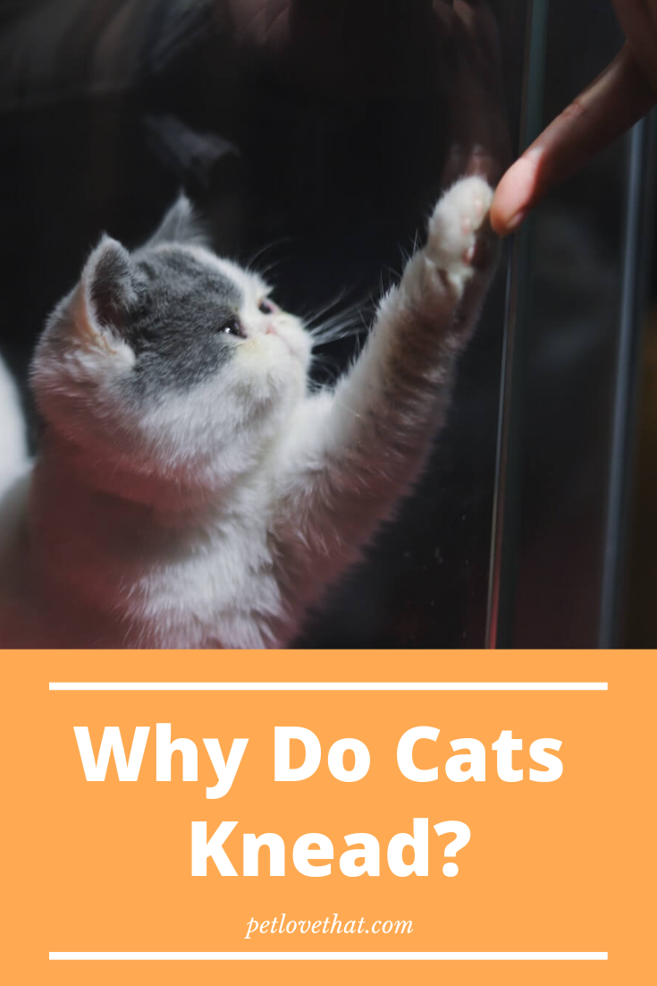 Why Do Cats Knead Cats, Cats knead, Cat questions