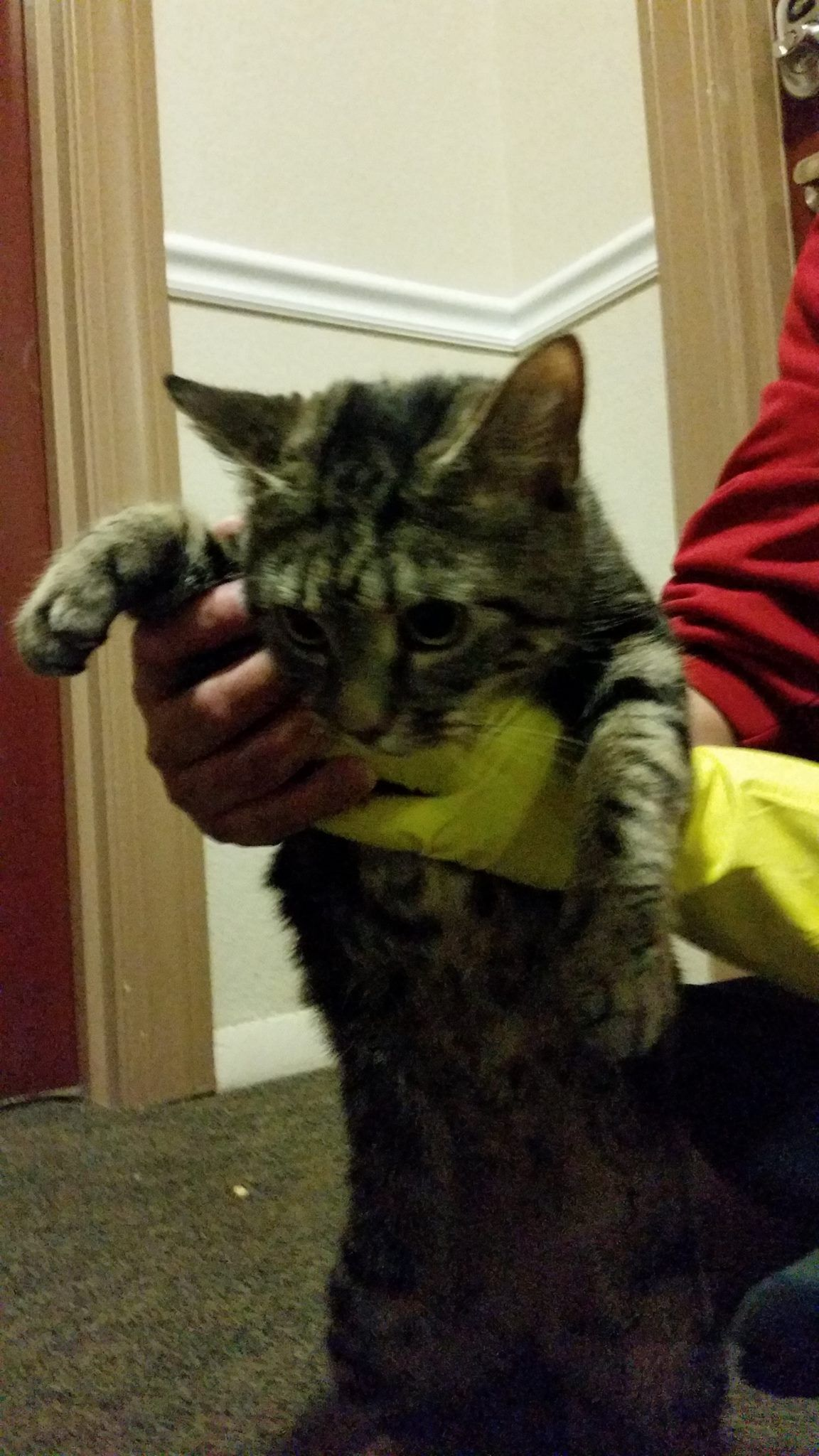 New Britain Ct My Son Found This Cat In His Building And Asked All His Neighbour If It Was Theirs They All Said No He Lives In Found Cat Cats Cat