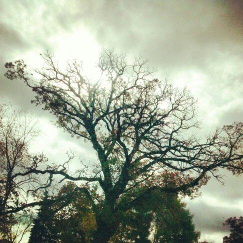 #tree #life @imerica247
