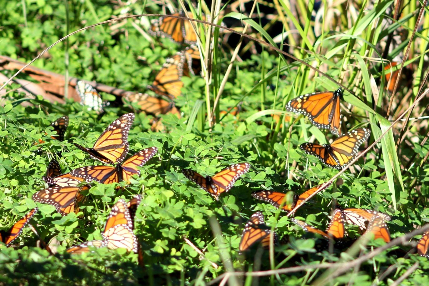 Butterflies everywhere! - Photo credit: Valerie Kushnerov