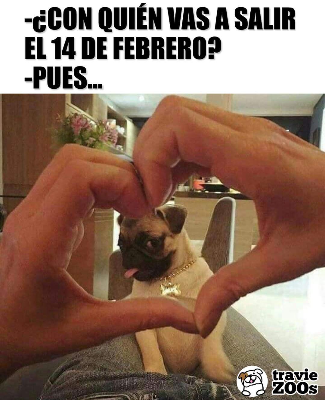 Con El Firulais Al Parque Pues Con Quien Mas Valentine 14defebrro Febrero A Imagenes Divertidas De Animales Humor Divertido Sobre Animales Firulais