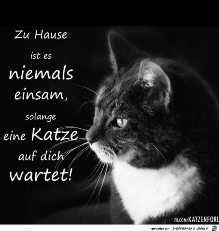 zu Hause ist es niemals einsam.....