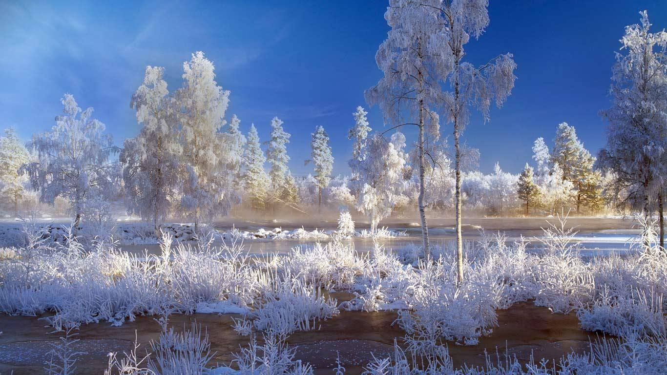 Trees And Plants Covered With Snow In Dalarna Sweden Winter Landscape Winter Desktop Background Landscape Wallpaper