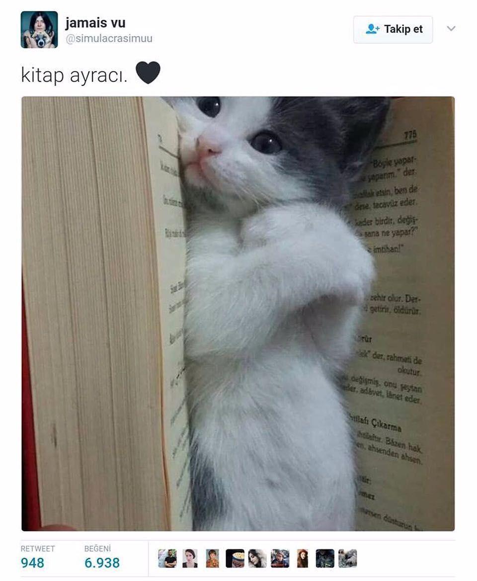 Anlamli Dusundurucu Eglenceli Guzel Komik Konusan Resimler Konusan Resimler Www Kizlarinsirlari C Cute Kittens Hayvan Fikralari Kediler Ve Yavrulari