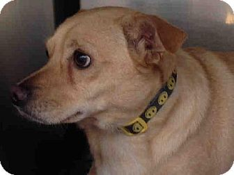 Rancho Cucamonga, CA - Chihuahua Mix. Meet UNKNOWN, a dog for adoption. http://www.adoptapet.com/pet/12080013-rancho-cucamonga-california-chihuahua-mix