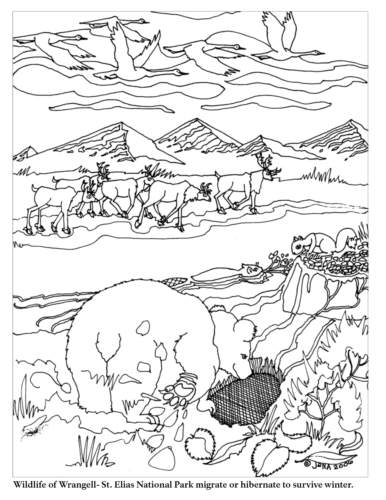 Animal Migration Coloring Pages Hibernating Animals Preschool Winter Theme Preschool Coloring Pages Winter