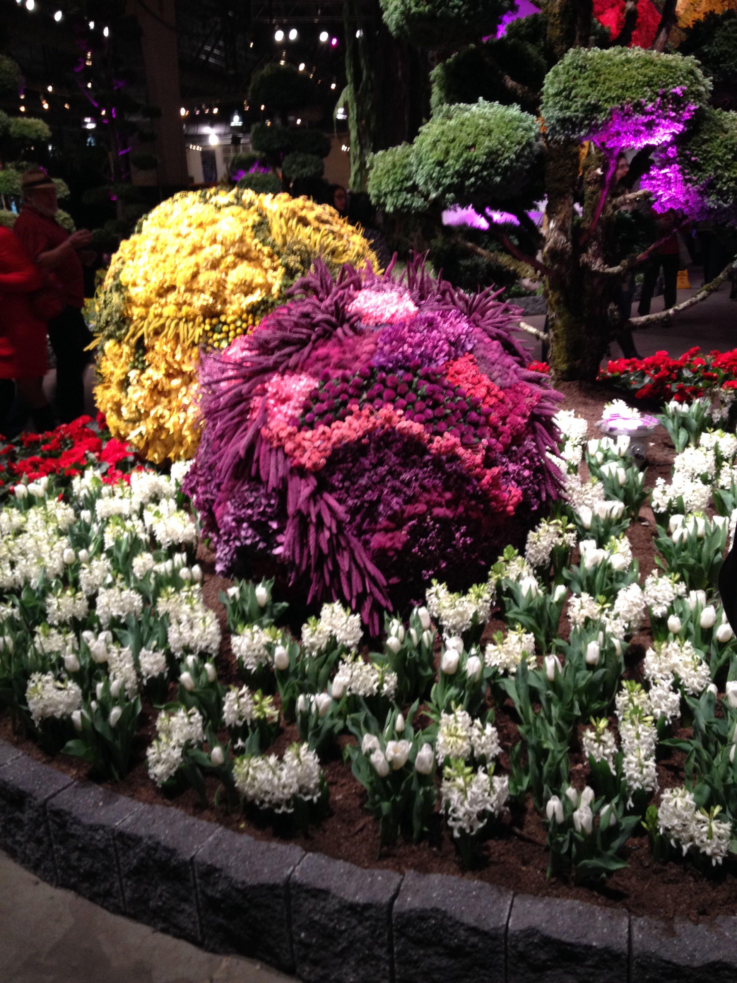 Gerber Daisy Philadelphia Flower Show - Philadelphia Flower Show &
