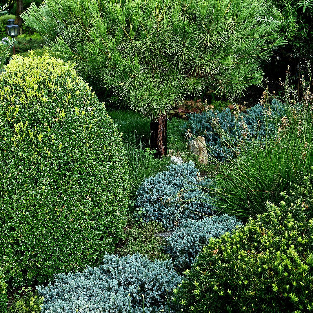 What To Prune When In Your Garden For The Healthiest Plants Winter Shrubs Pruning Shrubs Broadleaf Evergreen