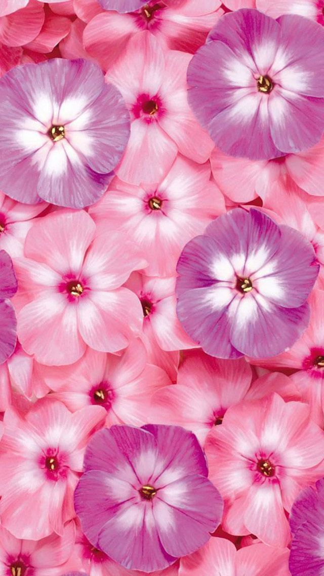 Pink Flowers Iphone Wallpaper Background Flower Desktop Wallpaper Pink Flowers Wallpaper Cute Flower Wallpapers