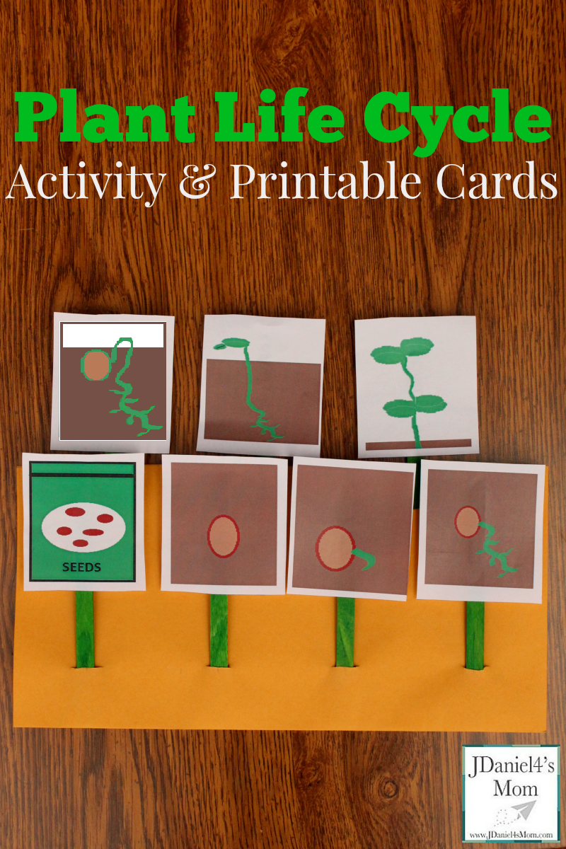 Plant Life Cycle Activity And Printable Cards Plant Life Cycle Plants Life Cycle Activities Life Cycles Activities [ 1200 x 800 Pixel ]