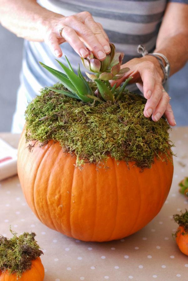 Diy Pumpkin Succulent Harvest Decoration Simplyhappenstance Com