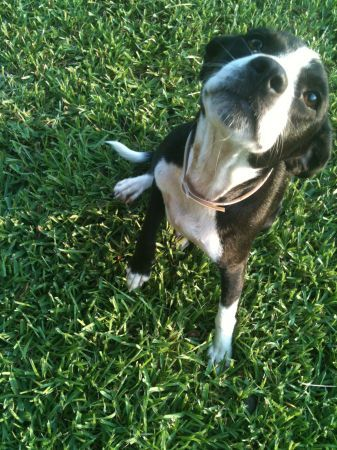 Found In Huffman Tx Reply To Hzccd 3202264876 Comm Craigslist Org We Found A Sweet Black And White Female Dog