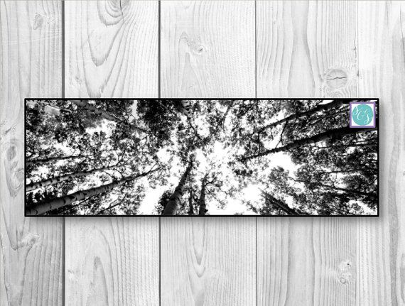 Large panoramic 20 x 60 or 12 x 36 inch black and white canvas photograph aspens