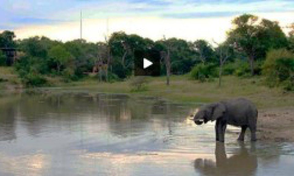 Live Webcam from Djuma Game Reserve in the Greater Kruger Park in South Africa