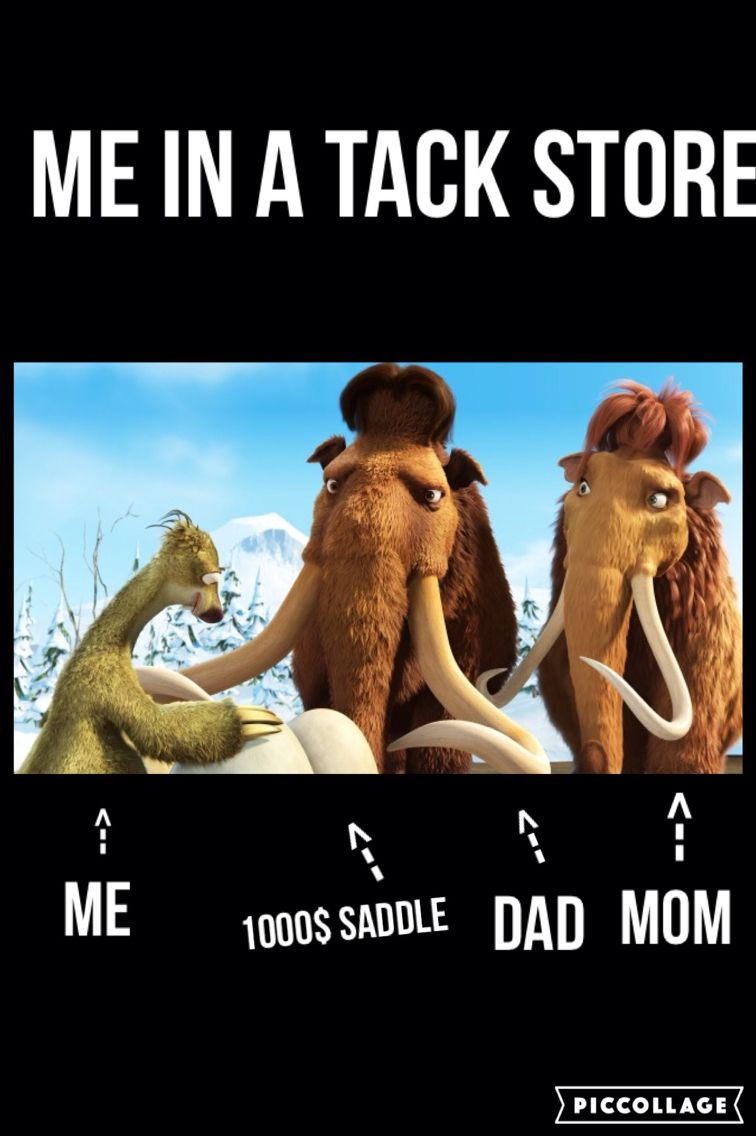 Me In A Tack Store Horse Riding Quotes Funny Horse Memes Horse Quotes Funny