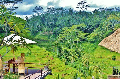 Wisata Kuliner Di Ubud Bali Info Tempat Wisata Di Indonesia Ubud Indonesia Bali