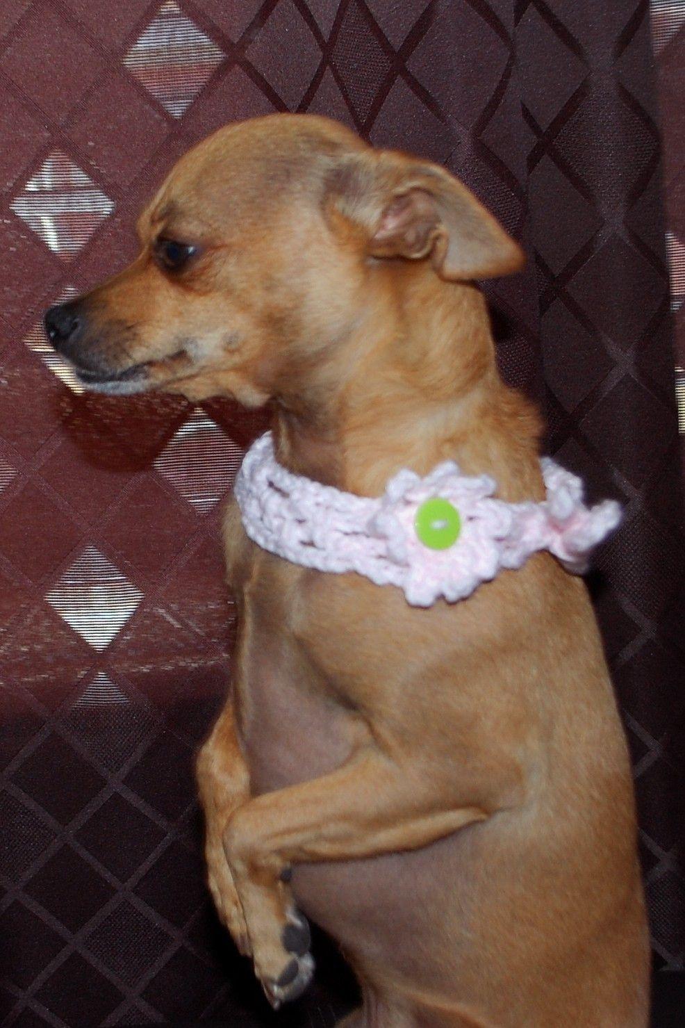 Lattice Dog Collar Crochet Pattern | Ropa para mascotas, Mascotas y ...