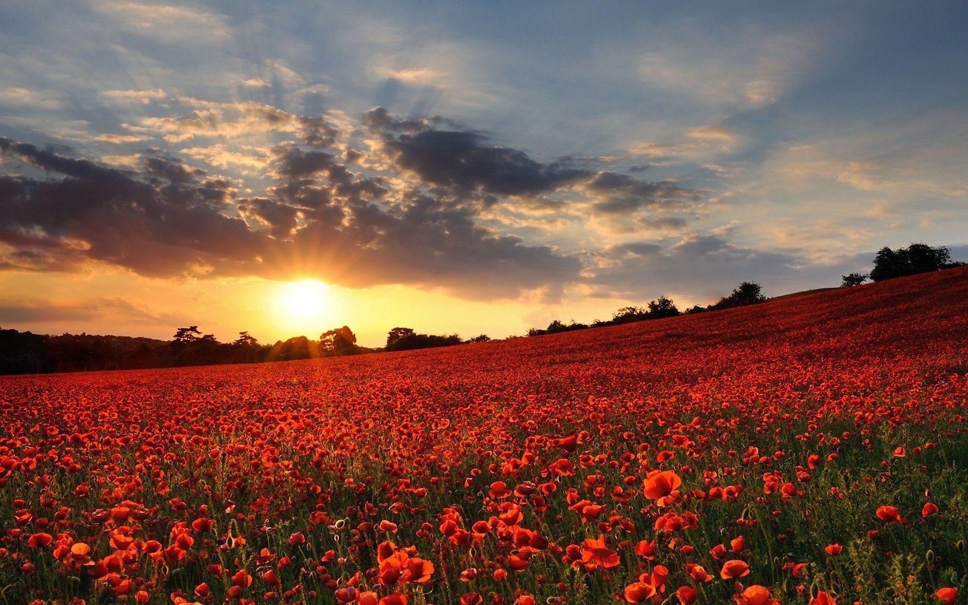 My Thinking Creates My Life Pretty Landscapes Poppy Field Sunset Wallpaper