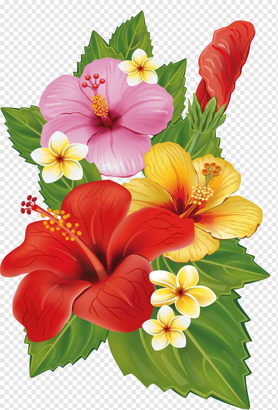 Hibiscus Flowers Illustration Flower Bouquet Decorative Arts Tropical Flower Herbaceous Plant Hibiscus Flower Drawing Flower Drawing Flower Bouquet Painting