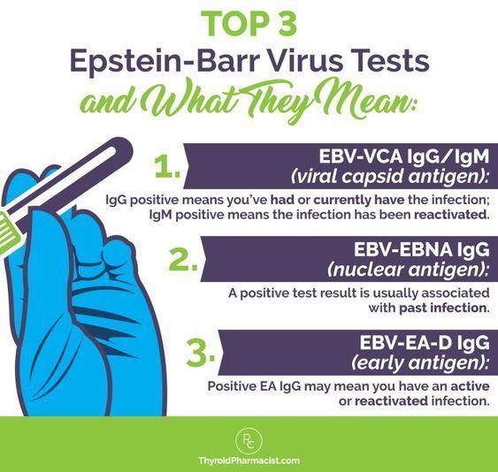 Epstein-Barr Virus and Hashimotos Dr  Izabella Wentz | Herpes