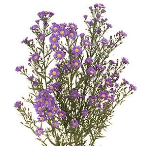 Aster Flowers Purple Fiftyflowers Com Aster Flower Lisianthus Flowers Wholesale Flowers