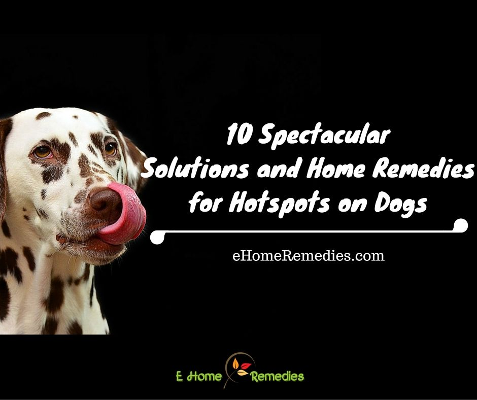 10 Spectacular Solutions And Home Remedies For Hotspots On Dogs
