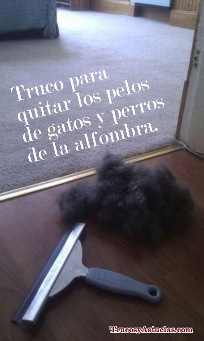 Quitar Pelos De Gato Y Perro De La Alfombra Dog Stuff