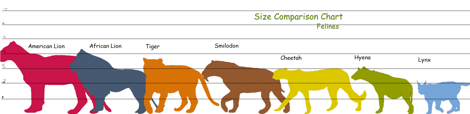 Feline height comparison chart Feline anatomy, African