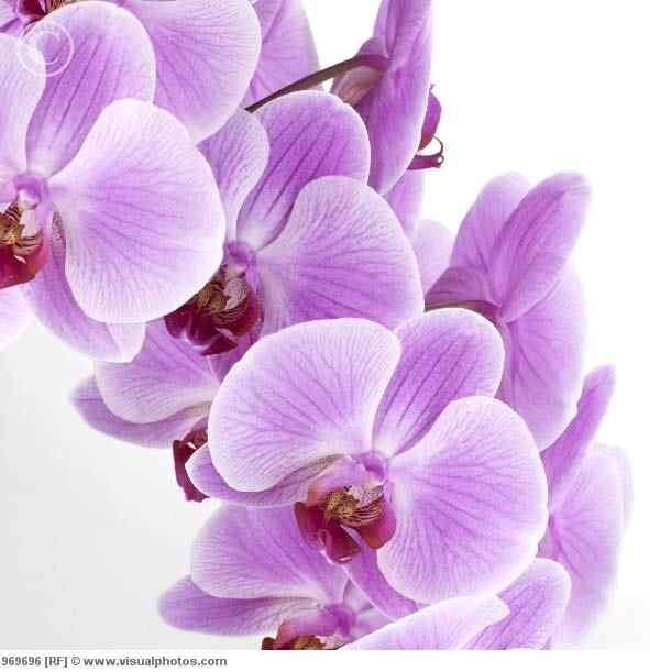 beautiful.. i <3 orchids!!!