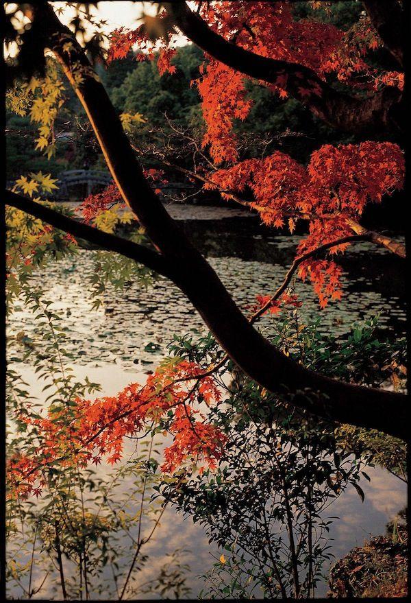 """""""Spirito del Giappone. Fotografie di Su zanne Helde"""""""