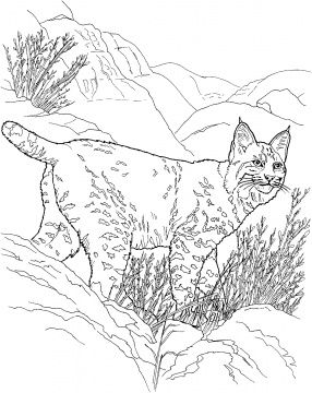 Lynx Coloring Pages Super Coloring Animal Coloring Pages Desert Animals Coloring Farm Animal Coloring Pages