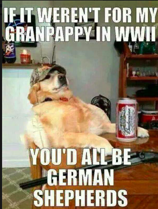 Memorial Day Lmao Funny Dog Memes Funny Dogs Funny Animals