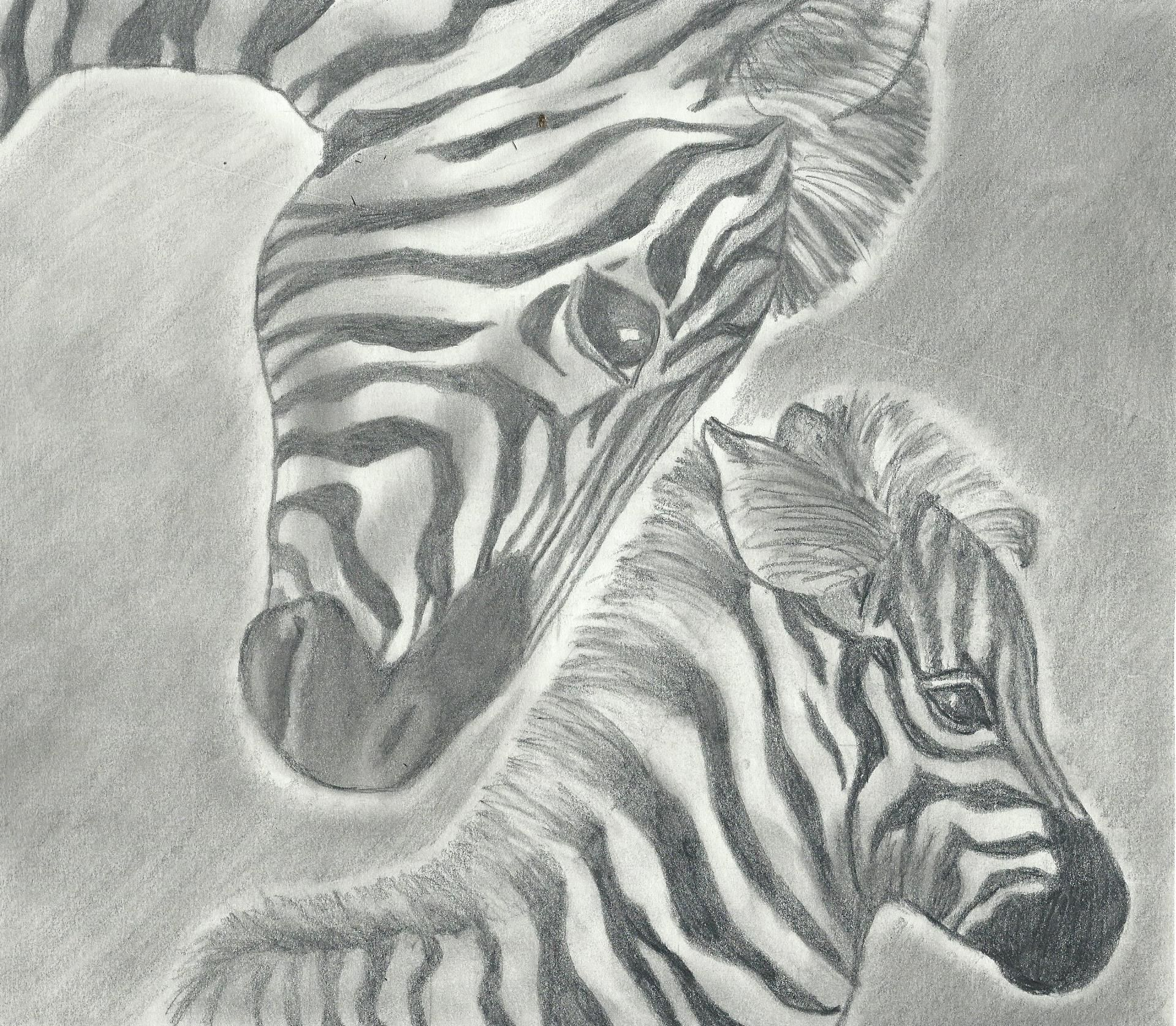 A pencil drawing of a zebra and her baby all my drawings are for
