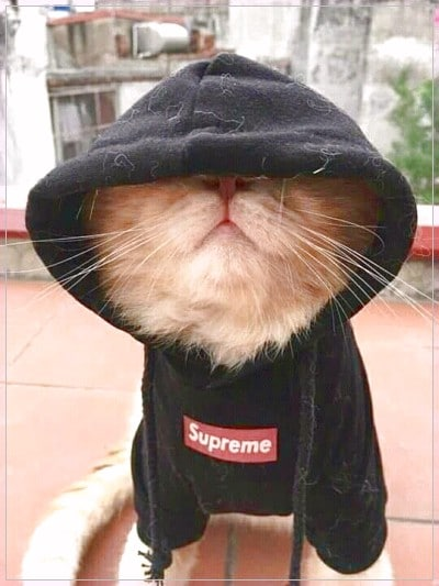 Gambar Kucing Lucu Gambar Kucing Lucu Kucing Lucu Binatang Lucu