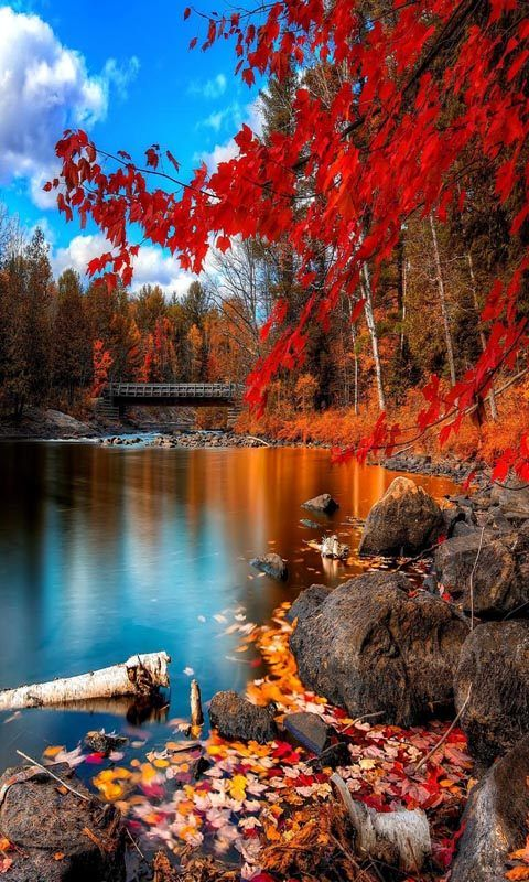 Beautifall Image By Cynthia Reece The Purple Iris Beautiful Nature Scenery Wallpaper Beautiful Landscapes