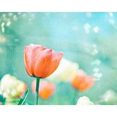 Found it at Wayfair - Garden of Dreams by Carolyn Cochrane Photographic Print on Wrapped Canvas