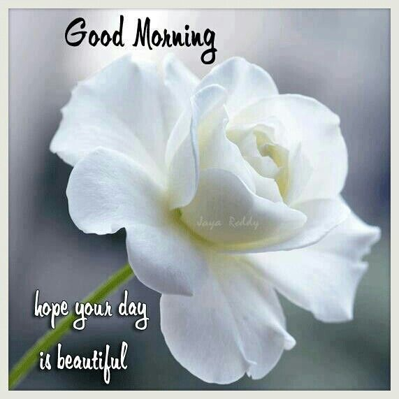 Good Morning My Beautiful Friend Quotes: Good Morning.Hope Your Day Is Beautiful My Friend