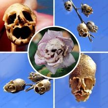 Skull-shaped flower seeds one of the world's rare horror flower seeds 10 particles / bag(China (Mainland))