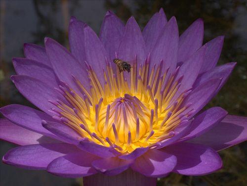 Flower -manel