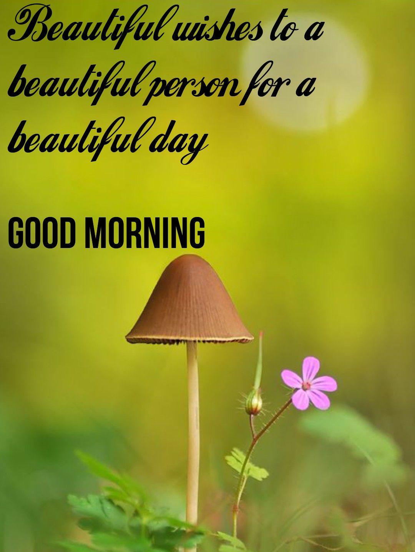 Pin By Angela On Good Morning Good Morning Nature Good Morning Quotes Good Morning Inspiration