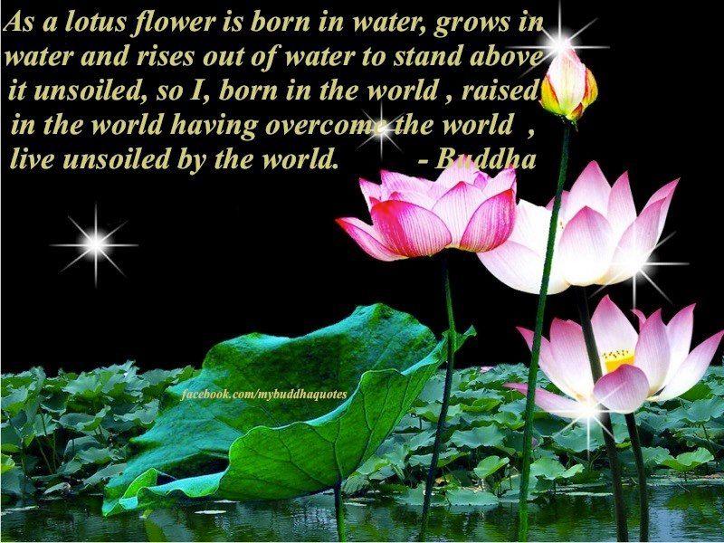 Breathe Tgif Typography Lotus Quote Lotus Flower Quote