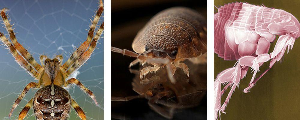 Flea Exterminator Near Me