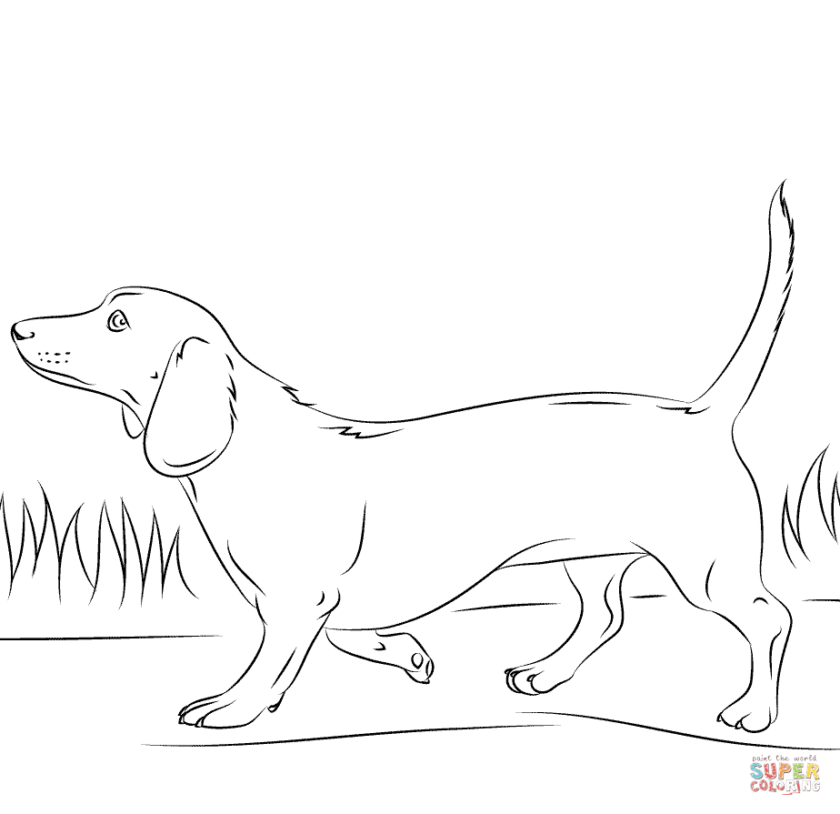 Dachshund dog | Super Coloring | Dog coloring page, Dog ...