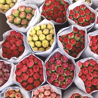 خلفيات ورد منتديات لسعة ثلج خلفيات ورد Food Raspberry Fruit
